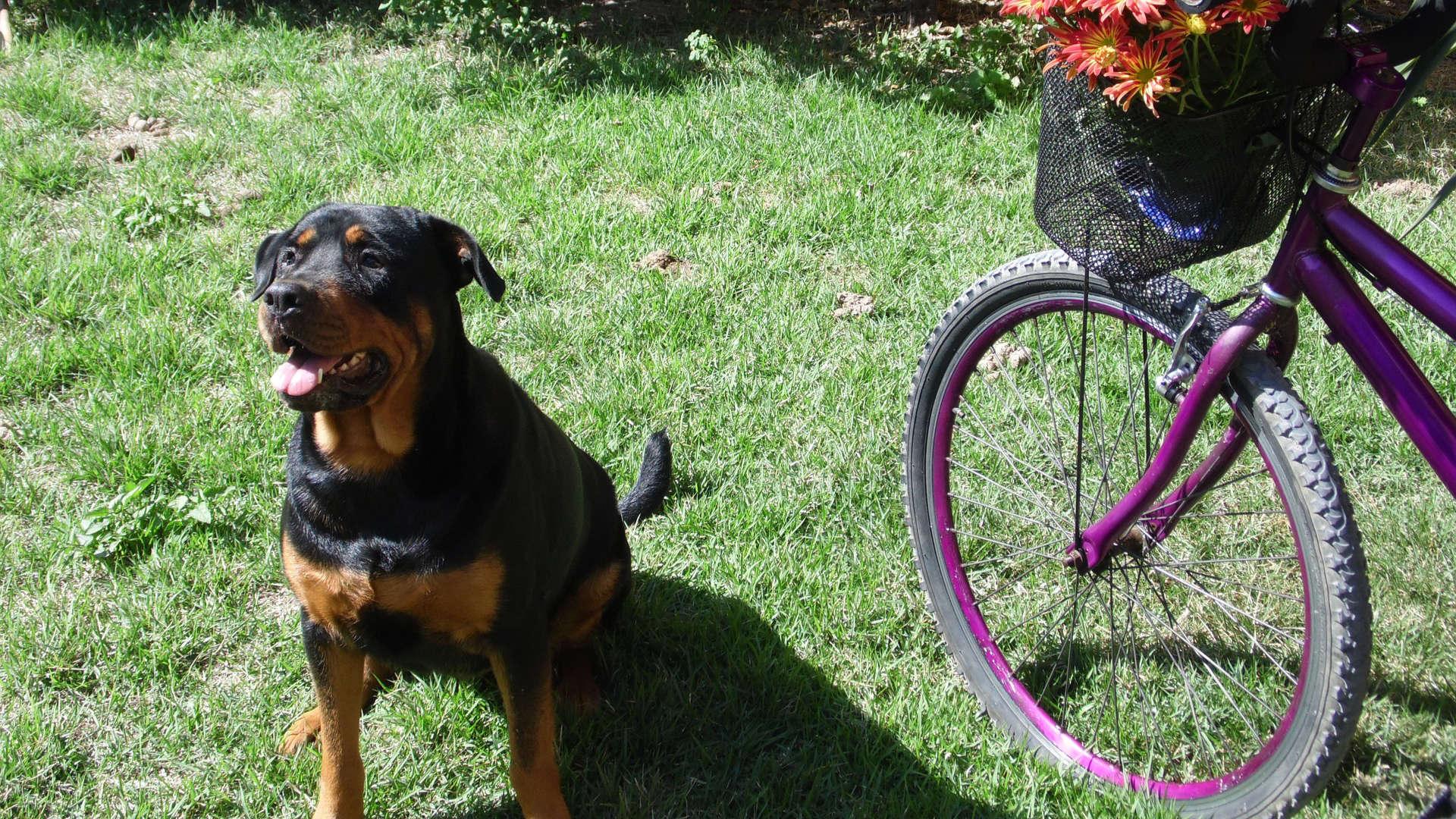 Hund und Fahrradfahrer