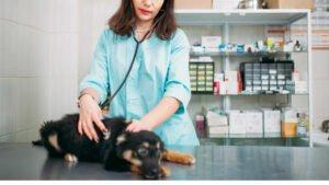 Schadensersatz für toten Hund