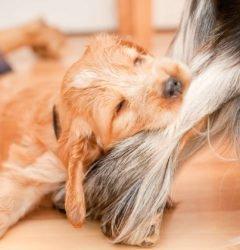 Schmerzensgeld nach Hundebiss erhalten