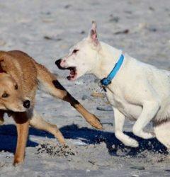 Hunderauferei