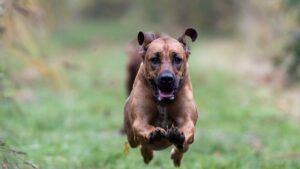 Angst und Panik nach Hundebiss