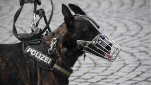 Hundebiss von Polizeihund
