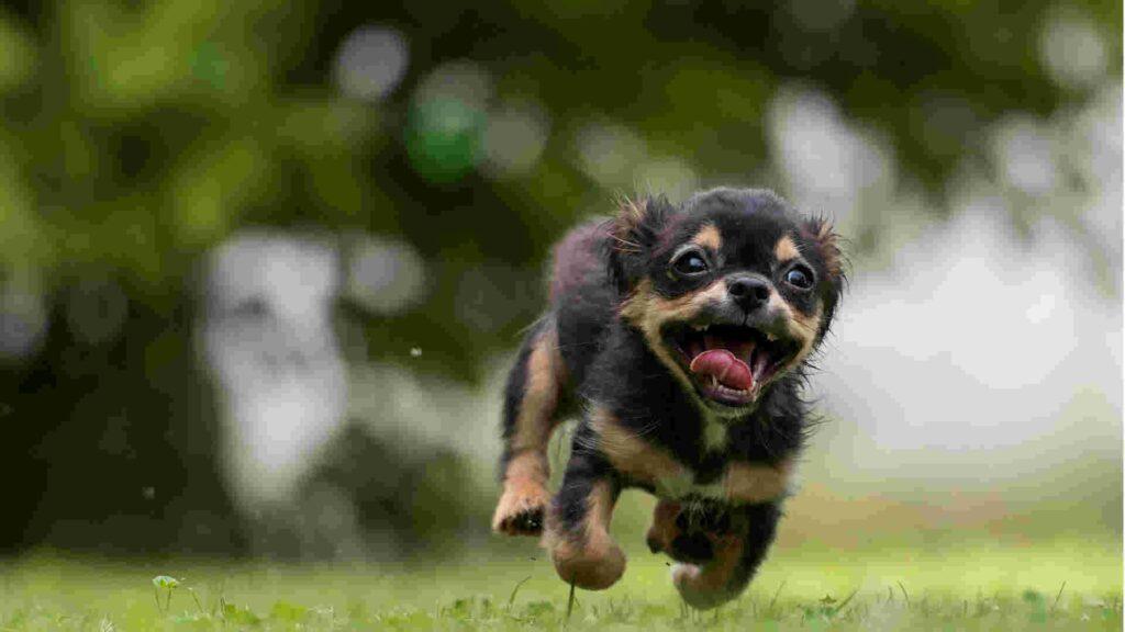 Wichtige Urteile zur Mitschuld nach Hundebiss